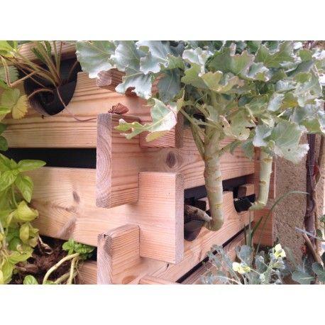 Épinglé par Maï Lan Su sur jardinage | Planter des légumes ...