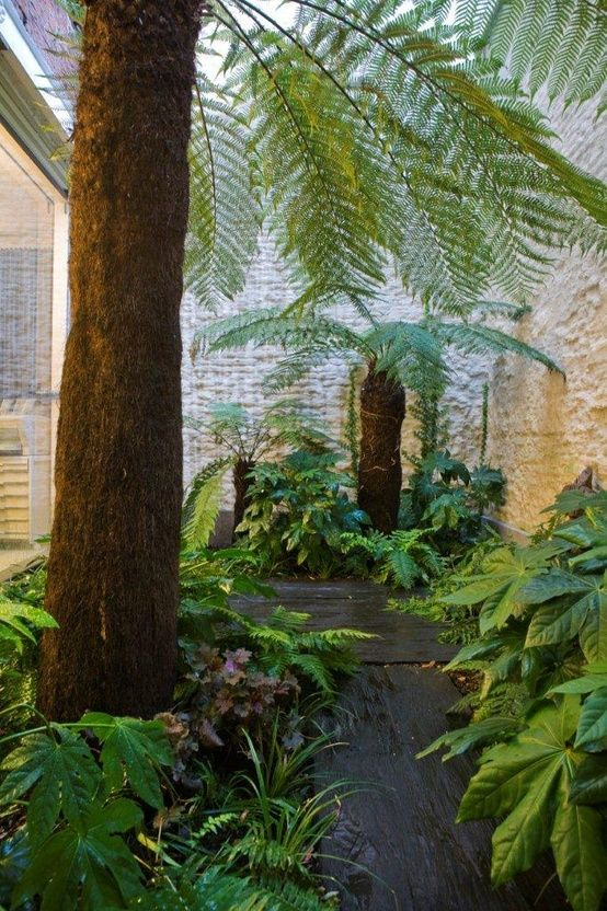 17 meilleures id es propos de foug re arborescente sur for Fougere interieur