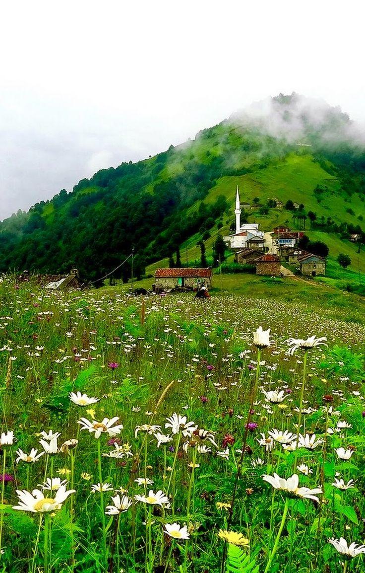 Trabzon | TÜRKİYE  #Trabzon #Karadeniz #Türkiye #Turkey #Türkei #Laz - sıtkı ÇOBANOĞLU - Google+