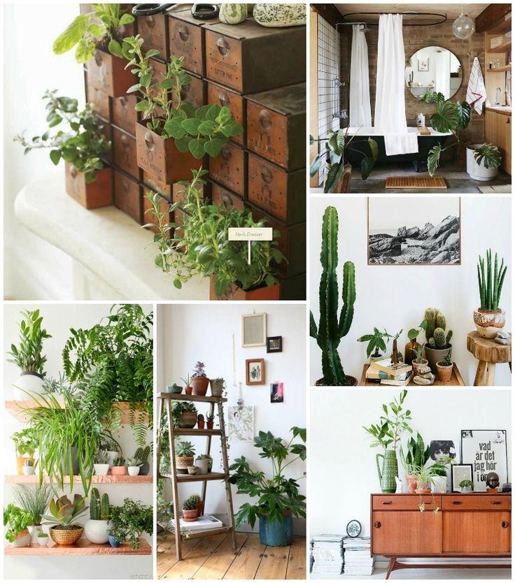 Planten in huis - Teske.nl | Teske de Schepper
