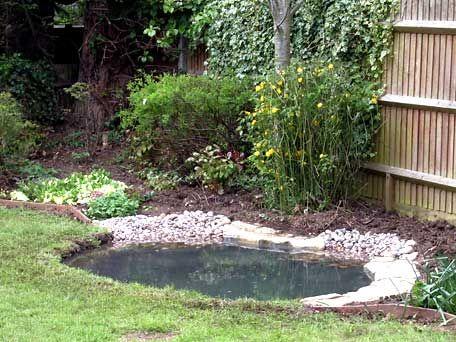 Garden Wildlife Pond Backyard Ponds Pinterest Pond Ponds