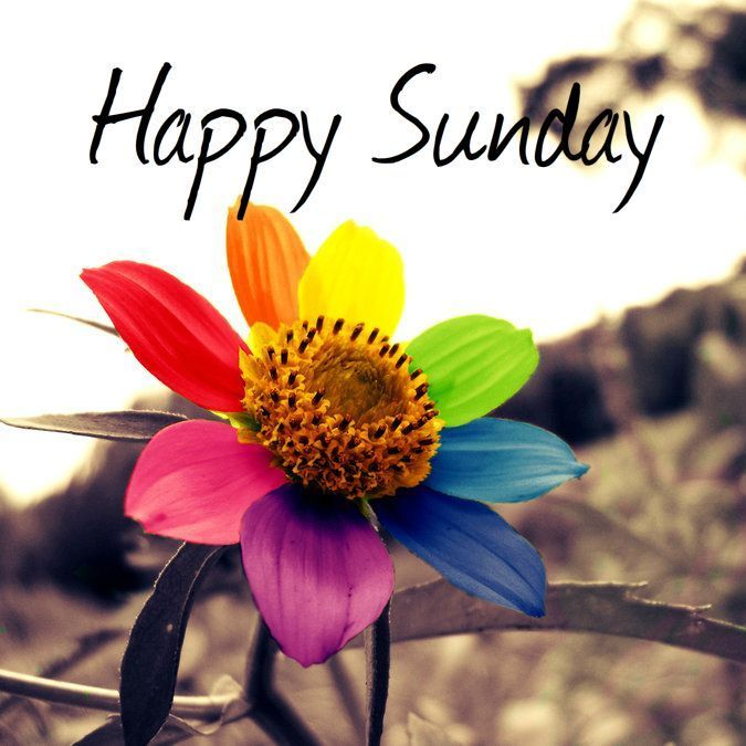 Happy Sunday Colorful Flower good morning sunday sunday quotes good morning quotes happy sunday sunday quote happy sunday quotes good morning sunday beautiful sunday quotes sunday quotes for friends and family