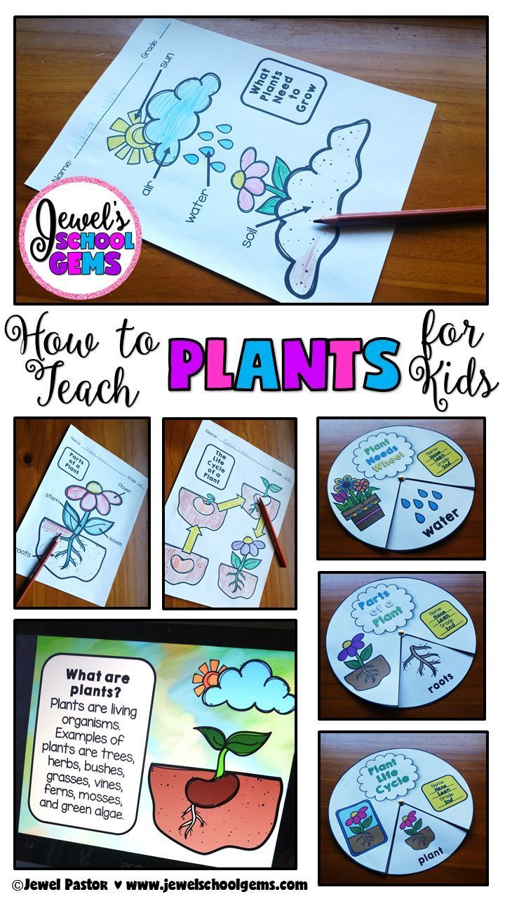 Teacher Cheat Sheet: HOW TO TEACH PLANTS FOR KIDS | Jewel's School Gems | There…