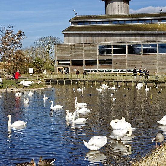 Slimbridge Wetland Centre, Gloucestershire, United Kingdom.