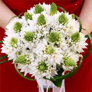 star of bethlehem flower - Google Search