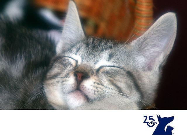 Ceguera en gatos. CLÍNICA VETERINARIA DEL BOSQUE. Los gatos tienen una de las mejores vistas, sobre todo la nocturna. Sin embargo, no son inmunes a la ceguera o pérdida parcial de la vista. Las causas más comunes son traumatismos, hipertensión arterial. Si notas que tu gato camina pegado al suelo o a las orillas de las habitaciones y jardín, tiene menos confianza o sus ojos cambian, puede que esté desarrollando ceguera. Te recomendamos traerlo para checar su visión…