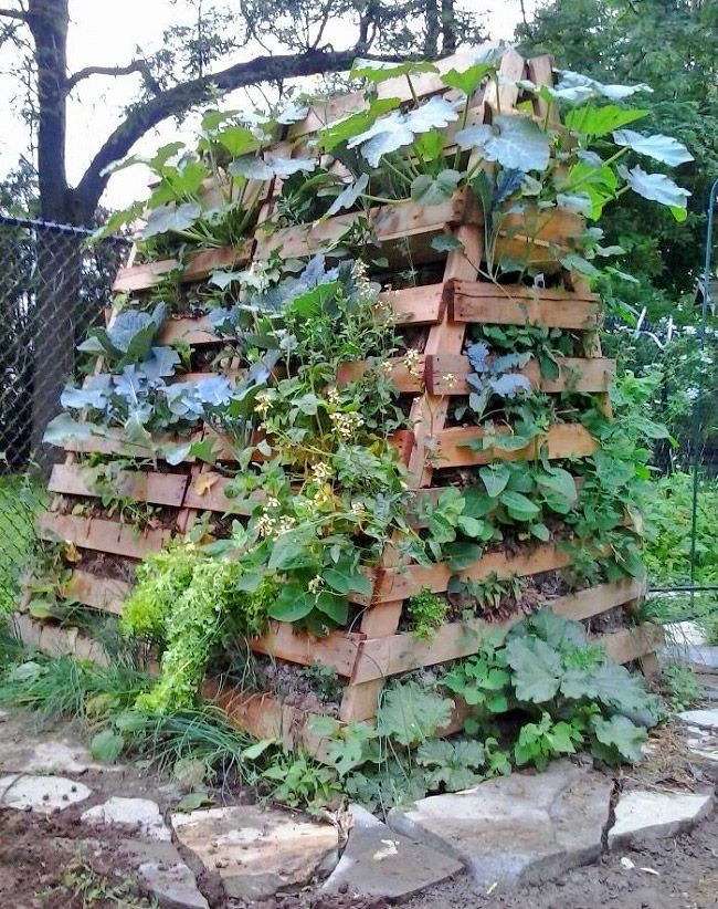 Permaculture---using-the-brain-not-the-muscle