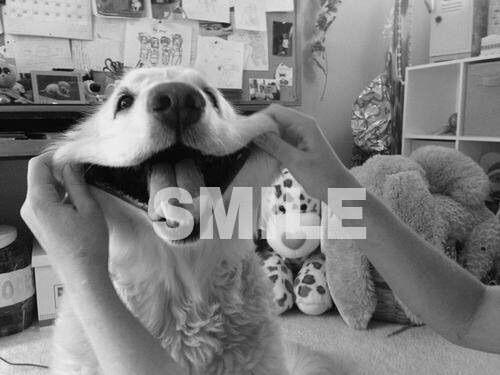 Image via We Heart It #b&w #dog #smile #wordporn