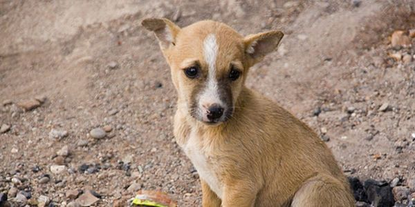 Tell India to stop export of street dogs for meat