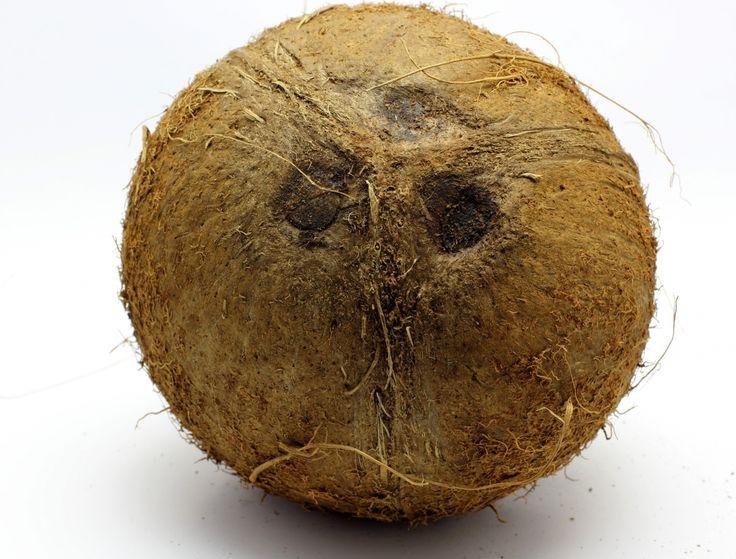 Coco-sin-fondo-1361603498_37.jpg (1200×913)