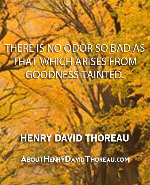thoreau goodness tainted quote Do good or be good thoreau's individualism (walden 41)  today's quote is equally provocative  the odor of goodness tainted.