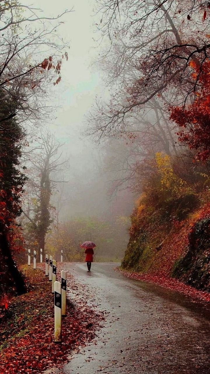 Autumn Emotions On Wet Roads On Autumn Nights All Pleasures And All Pains Remembering The Boughs Of Summe Autumn Scenery Beautiful Nature Fall Pictures