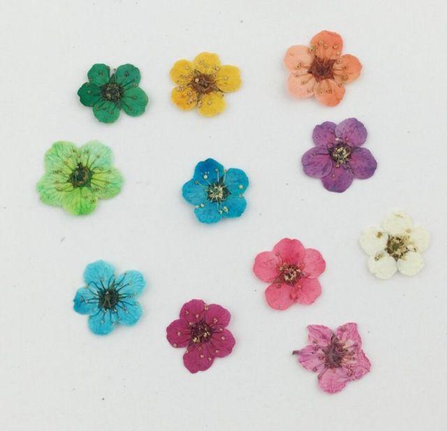 100 sztuk wciśnięty suszone plum blossom kwiat roślin herbarium dla razy kolczyki kamienie szlachetne biżuteria wisiorek pierścienie kwiat podejmowania akcesoria