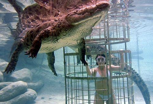 Dive with crocs in Oudtshoorn