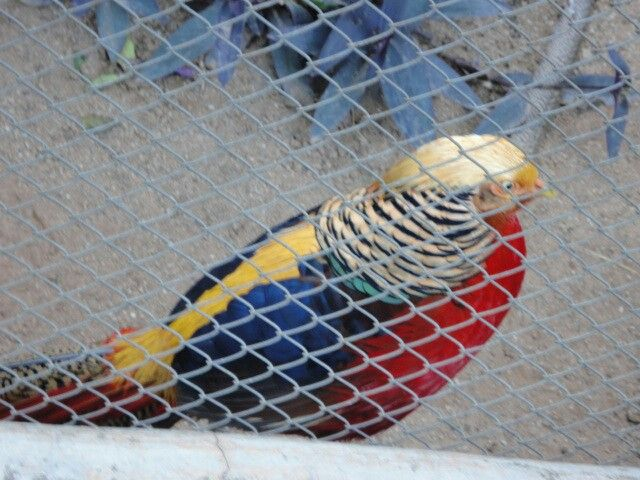 La tricolor en Brasil