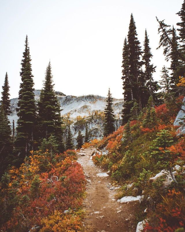 I long for trails like this every day.  The weekend seems so distant.