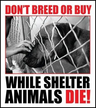 Rescue an AnimalWild Animal, Animal Rescue, Adoption, Dogs Cat, Pets, Make A Difference, Saving, Shelters Dogs, Animal Shelter