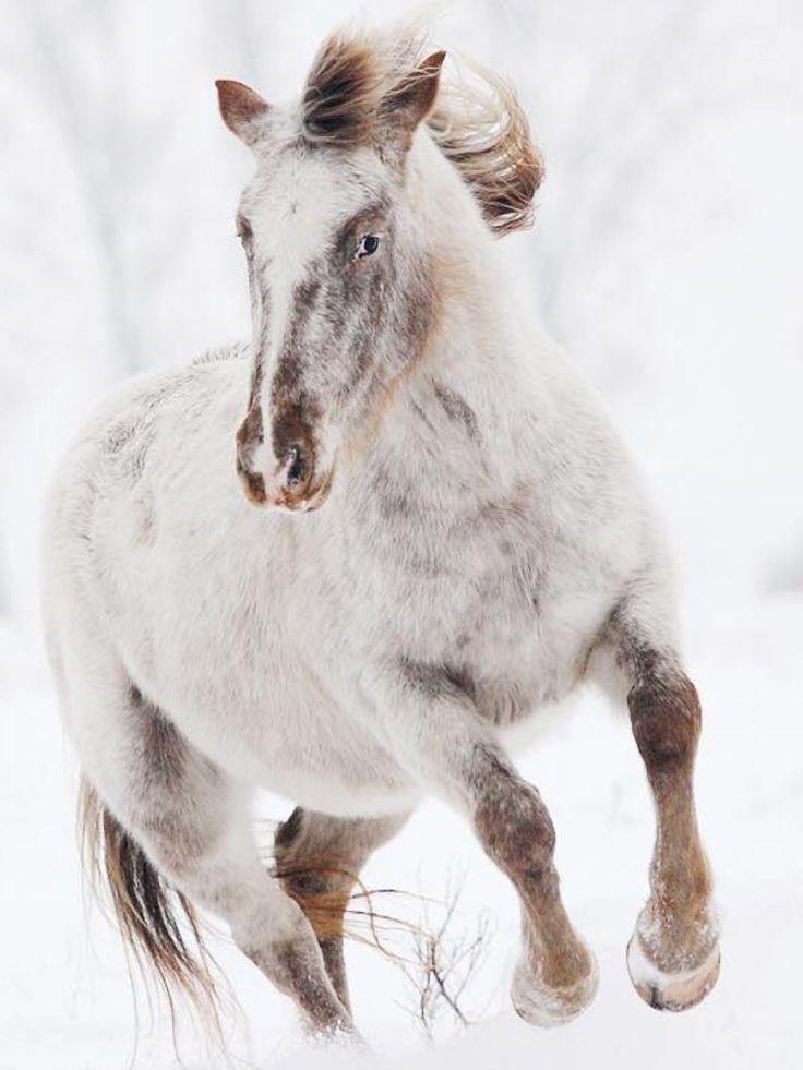 #HORSE##ANIMALS# #CUT##FUNNY#