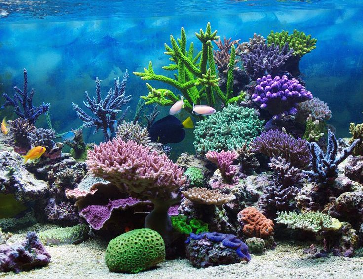 Most Beautiful Coral Reef World Underwater Photo