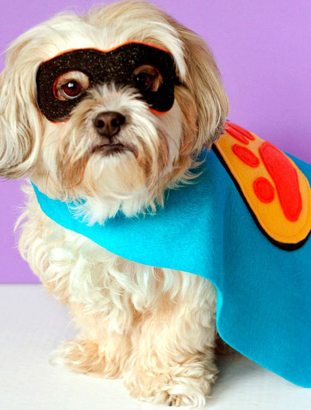 Dogs like to dress up for Halloween too! Try your hand at creating this simple superhero costume in five easy steps. Personalize the mask and cape with your favorite fabrics and colors.