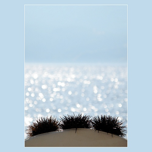 blue water and sea urchins...  by Skopelos ♫♪, via Flickr #seaurchins