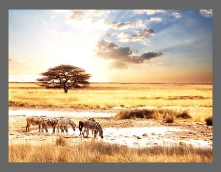 A1 Canvas Print ( Zebras in the Wild ) ( Print Only )