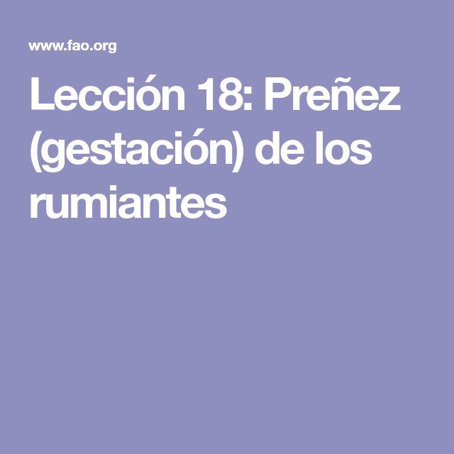 Lección 18: Preñez (gestación) de los rumiantes
