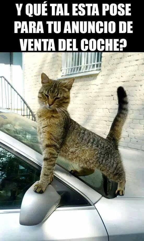 videoswatsapp.com imagenes chistosas videos graciosos memes risas gifs graciosos chistes divertidas humor gato tom http://chistegraficos.tumblr.com/post/169055271562/imagenes-de-risa