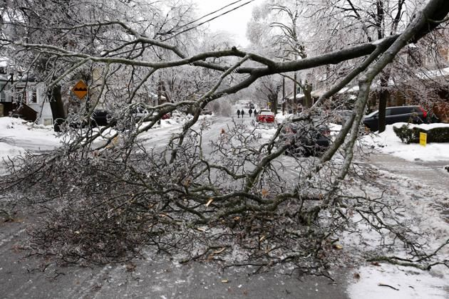 An ice-covered tree branch that came down after freezing rain blocks a road in Toronto, Ontario December 22, 2013.