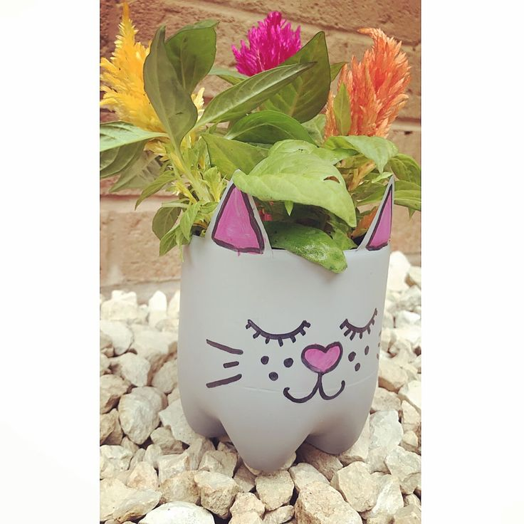 Cherryade bottle cat planter