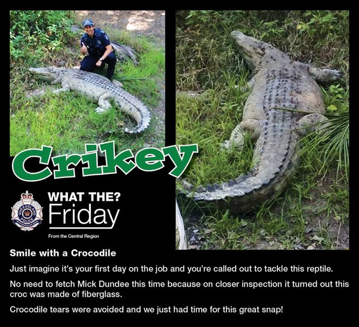 What the Friday! Highlighting some of the bizarre things officers see like...Crikey!  No crocodile tears just this great snap!