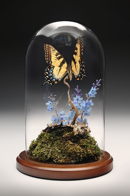 Custom Made And Designed Natural Real Butterfly In Glass