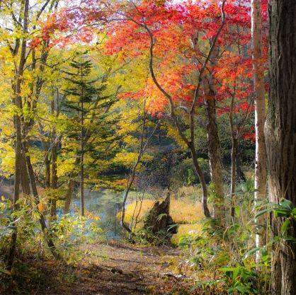 Kōyō   Autumn   Zaborin 坐忘林 Ryokan