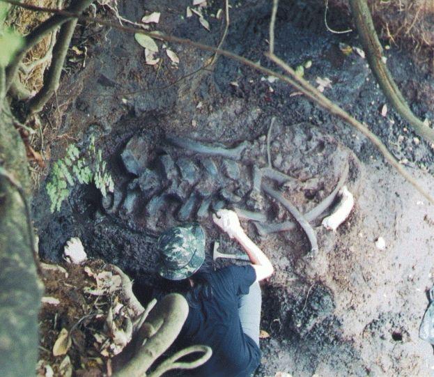 El Salvador: Excavation of a Megatherium in the Tomayate site Apopa.//excavación de un megaterio