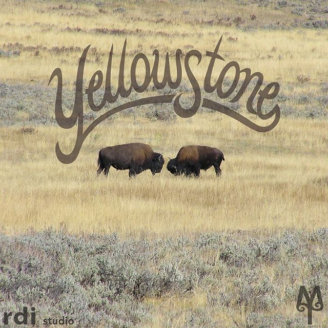 Fall colors in Yellowstone National Park often inspire the design of my vintage t-shirts and decorative wall signs.