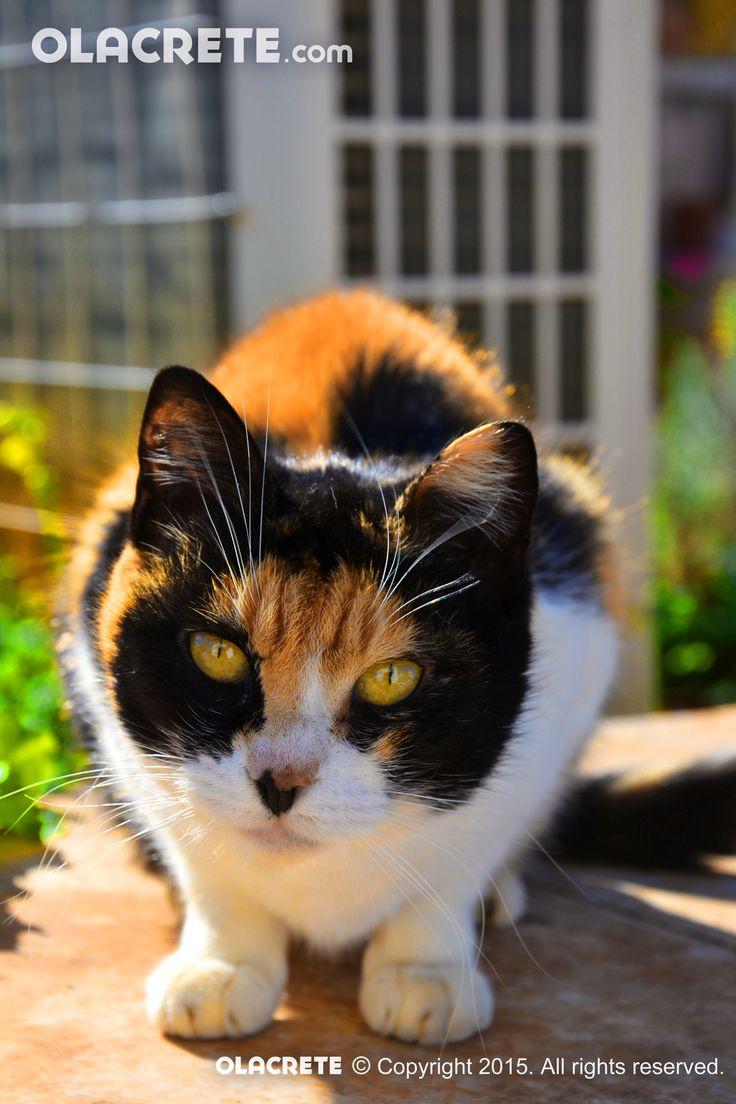 Curious cat - Koutouloufari