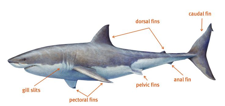 Anatomy Of A Great Picture: 28 Best Images About Animal Body Systems On Pinterest