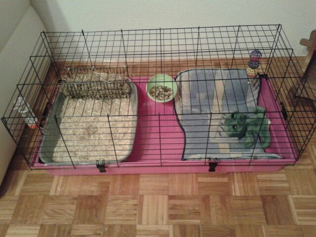 lionhead bunny cage setup bunny enclosures pinterest