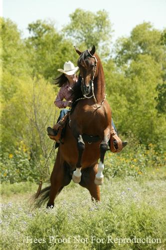 ...Cutting western quarter paint horse appaloosa equine tack cowboy cowgirl rodeo ranch show ponypleasure barrel racing pole bending saddle bronc gymkhana