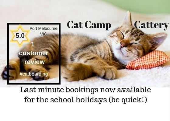 #schoolholidays #petboarding @catcampcattery #Port Melbourne #VIC #vacancies - http://www.catcamp.com.au/
