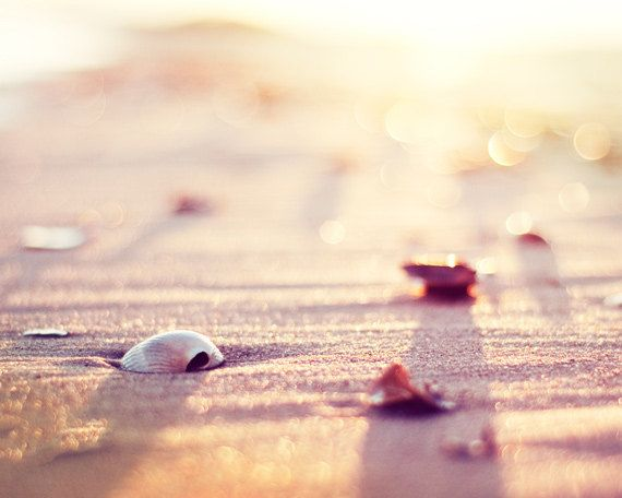 "Beach Photography, seashell print sea shell photo cream neutral peach pale pink shore decor wall art nautical 8×10 Photograph, ""Bliss"" – Ines Schaefer"