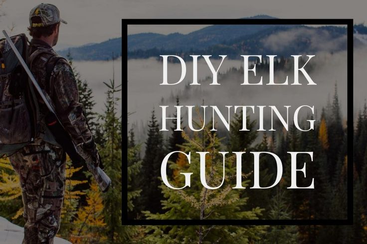 Early rifle elk season is feast or famine. In this episode of Pure Hunting's Willi and Chris set out to hunt the first elk rifle season in Colorado.