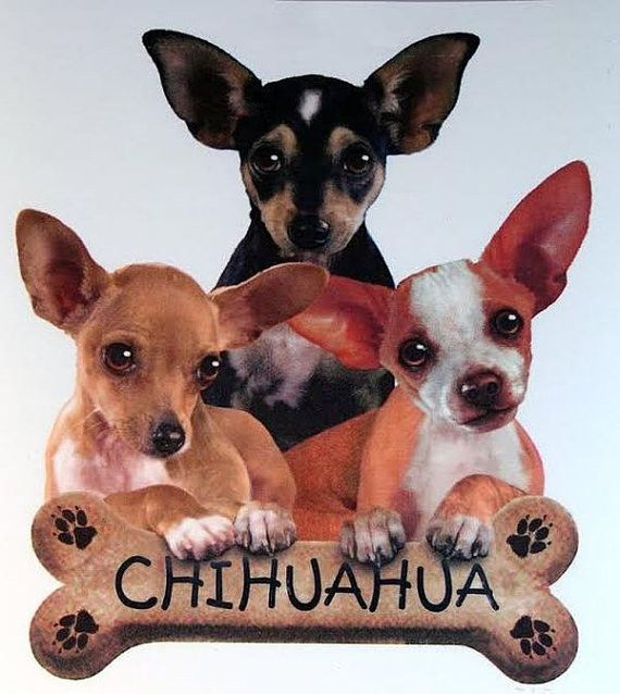 Puppies with Bone Biscuit Chihuahua Dog WOMANS T Shirt 10977