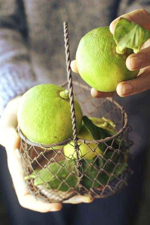 Astuces anti-gaspillage : bien conserver les légumes.  Crédit photo: londonfridge.com