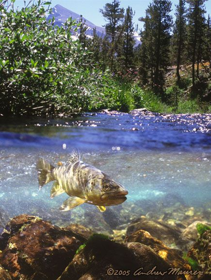 55 best bass fishing images on pinterest bass fishing for Freshwater pond fish