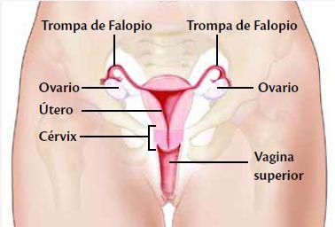 http://www.embarazoyfertilidad.com/fertilidad/dias-fertiles-y-posicion-del-cervix