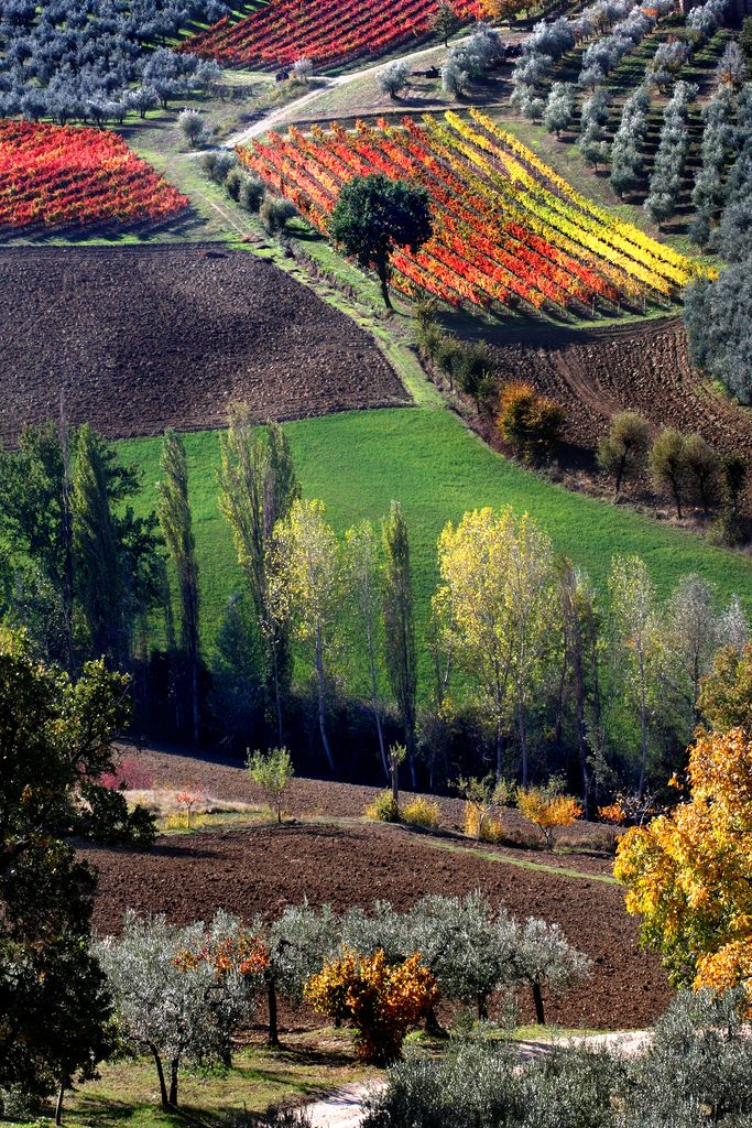 Umbria is a region of historic and modern central Italy. It is the only Italian region having neither a coastline nor a common border with other countries. Umbria is known for its landscapes, traditions, history, artistic legacy, and influence on culture. The region is characterized by hills and historical towns such as Assisi (associated with St. Francis of Assisi, the Basilica of San Francesco and other Franciscan sites, works by Giotto and Cimabue), Norcia (the hometown of St. Benedict).