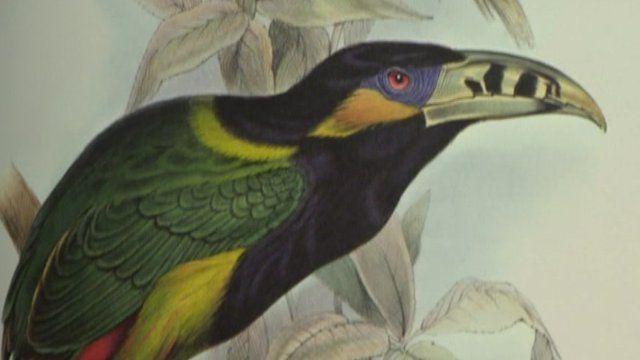 BBC News - David Attenborough's collection of Edward Lear's prints