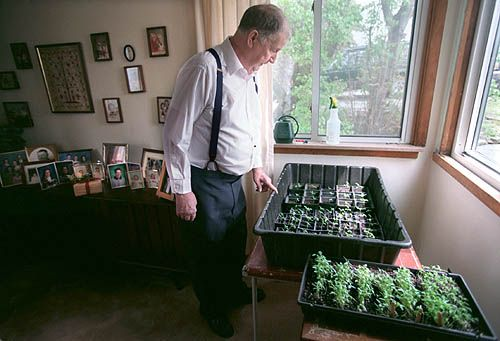 Seed exchange for 'Limbaugh Legacy Potato Top' tomato.