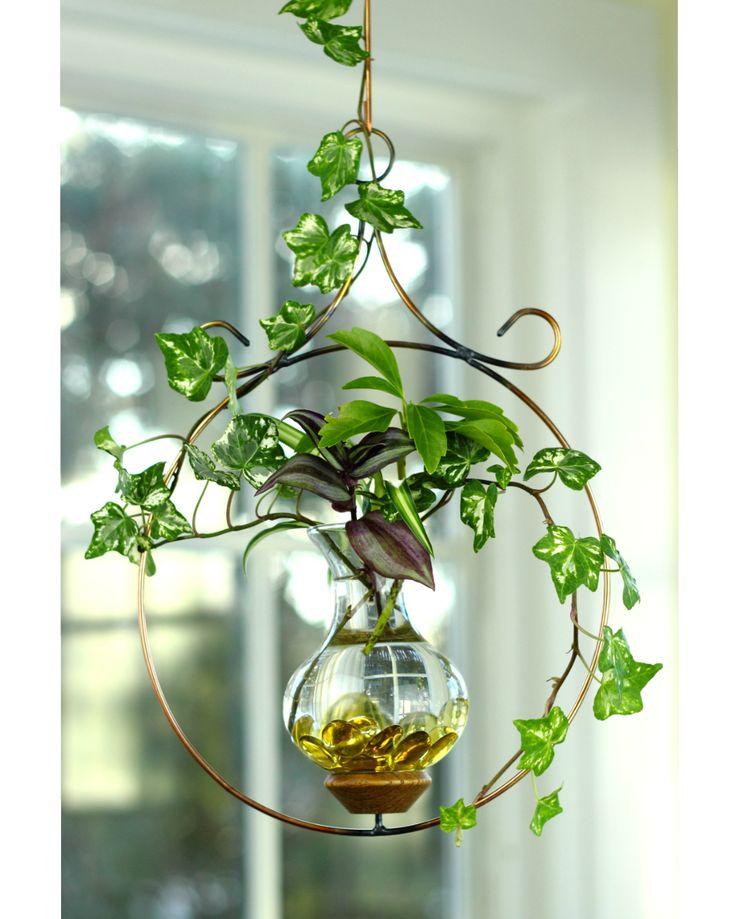 15 best ideas about types of ivy on pinterest ivy. Black Bedroom Furniture Sets. Home Design Ideas